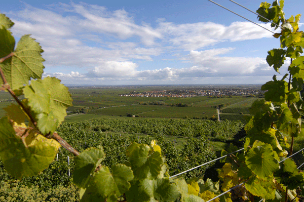 Bad Dürkheim - Pfalz