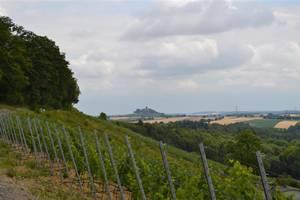 Flurbereinigungsplan: Hilsbacher Eichelberg wieder für Weinbau attraktiv