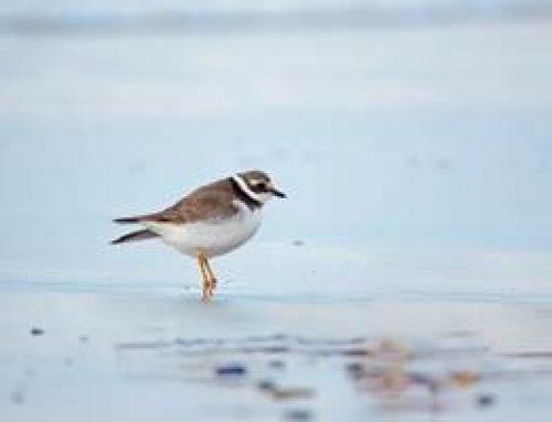 Hessen: Neue Rote Liste der Vögel